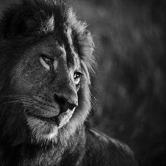 Benovalent king.jpg