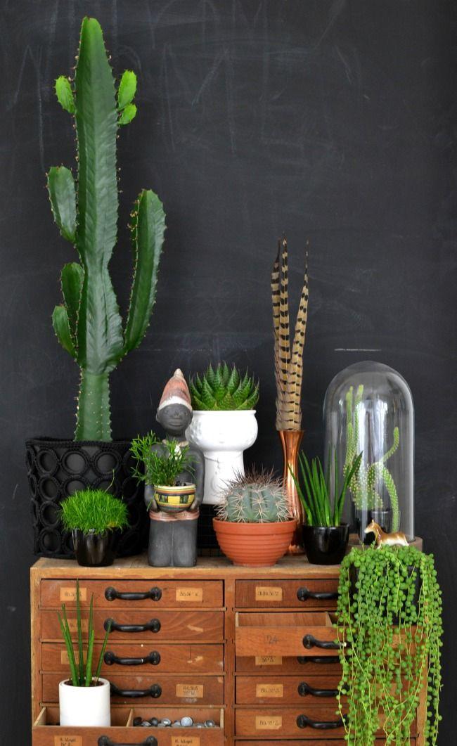 צמחים בעיצוב הבית