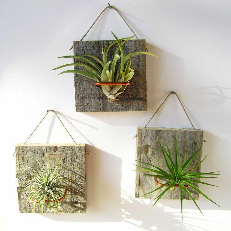צמחי אוויר. עיצוב הבית