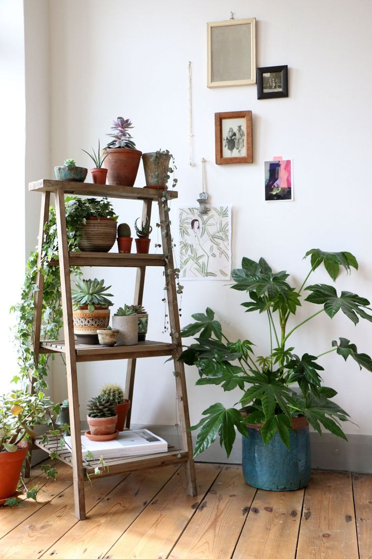 עיצוב הבית באמצעות צמחים