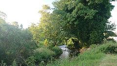 Garden stream.jpg