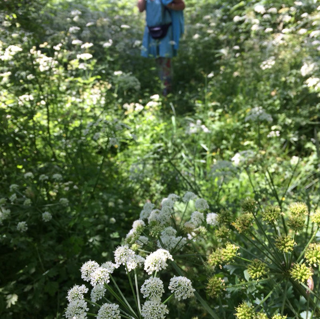 Wild crafting and foraging
