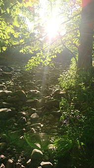 Garden stream 2.jpg