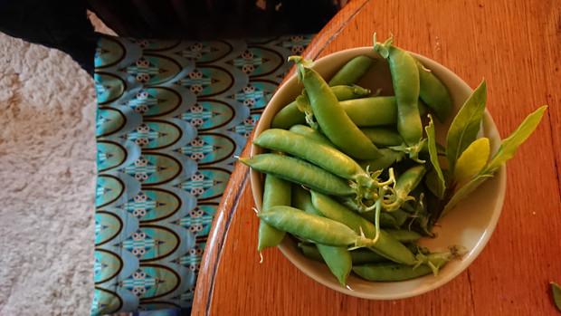 Lots of peas here