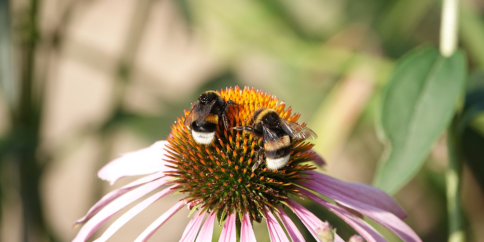 ONLINE - Mindful Watercolour Painting Workshop - bees