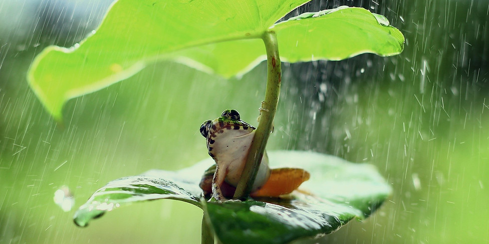 ONLINE - extra painting class - Mindful Watercolour Painting Workshop - frog