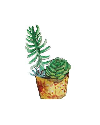 cactus 2.png
