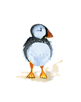 puffin 1.png