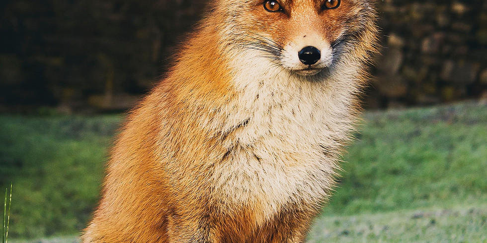 ONLINE  Lunchtime Class - Mindful Watercolour Painting - fox