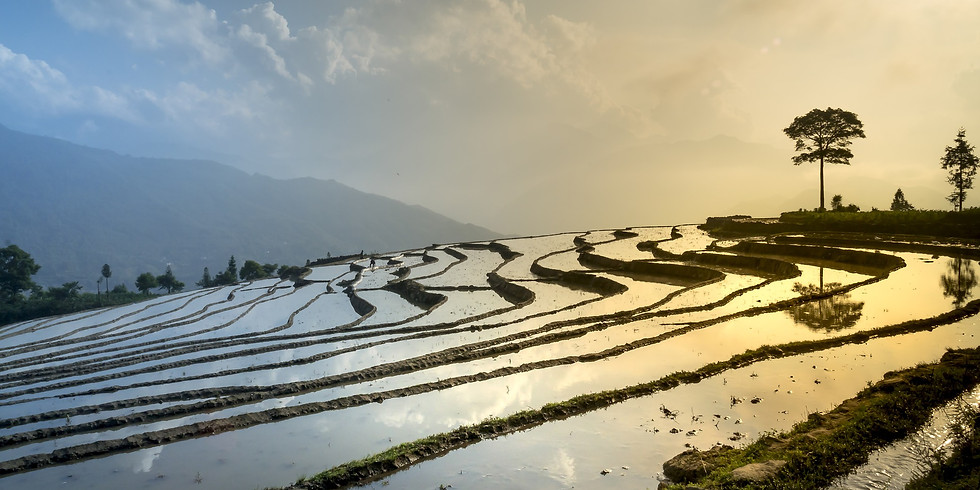 ONLINE - Mindful Watercolour Painting Workshop - rice fields
