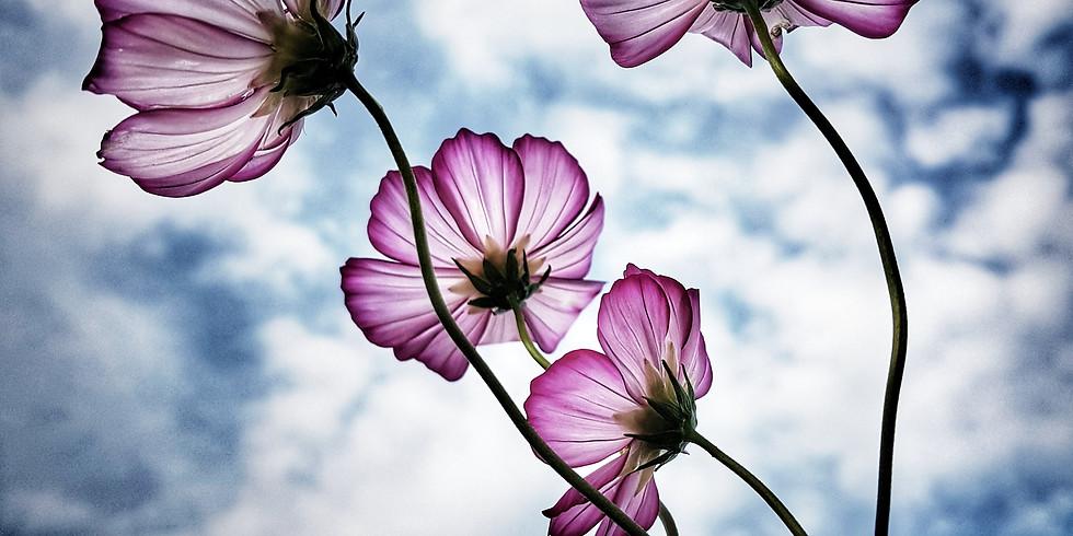 ONLINE - Mindful Watercolour Gouache Painting Workshop - flowers