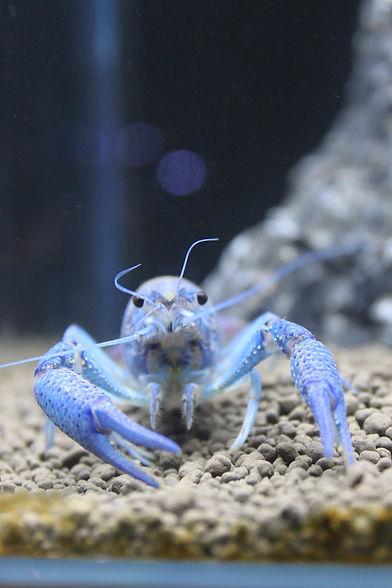 aquarium-2632255_1920.jpg