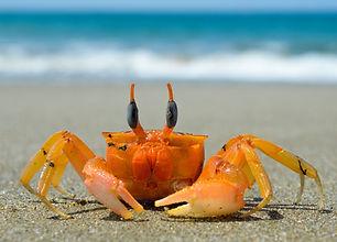 crustacean-3377646_1920.jpg