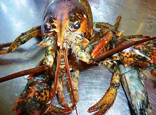 lobster-941283_1920.jpg