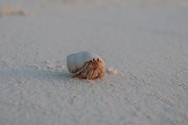 crab-5735132_1920.jpg