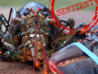 Everything you need to know about the government's review of decapod sentience
