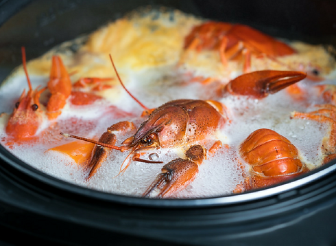 Lobsters in a pot.png
