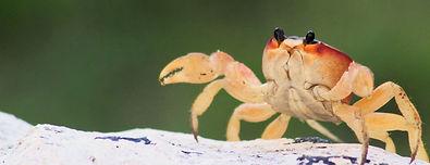 crab on rock_edited.jpg