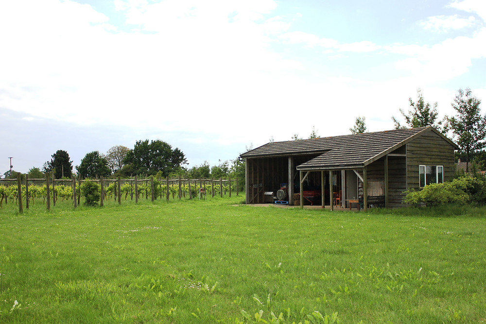 Barn with tractor and rows of vines