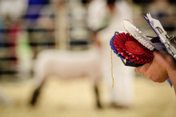 Ribbons in the Ring