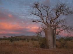 Argyle region of Western Australia.