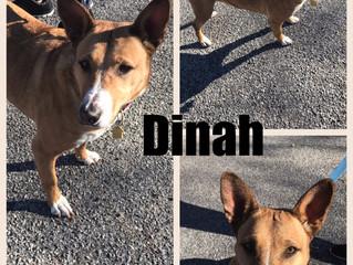 Dinah Blog!