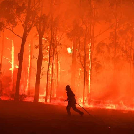 The Australian bushfires: what is really going on?
