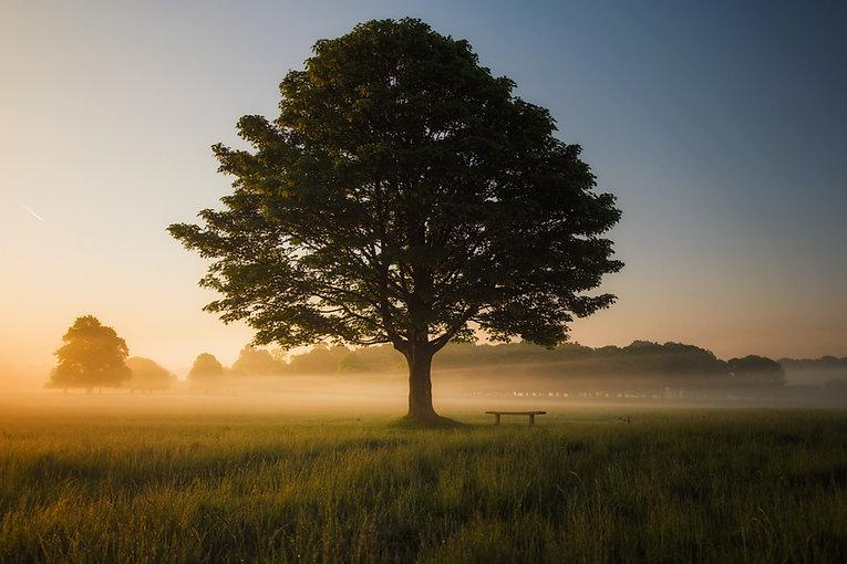 treeFog.jpg