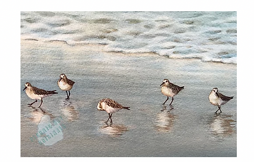Frames Sand Pipers