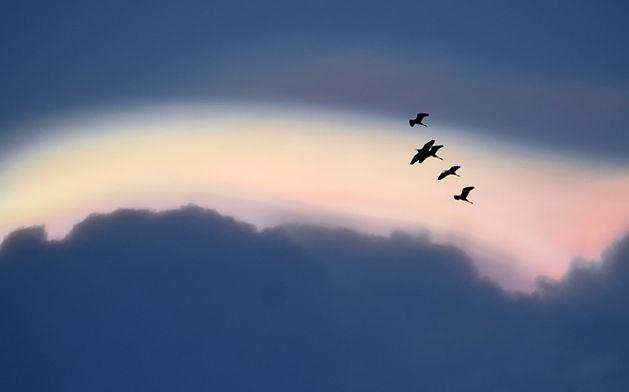 Birds%20returning%20back%20at%20twilight