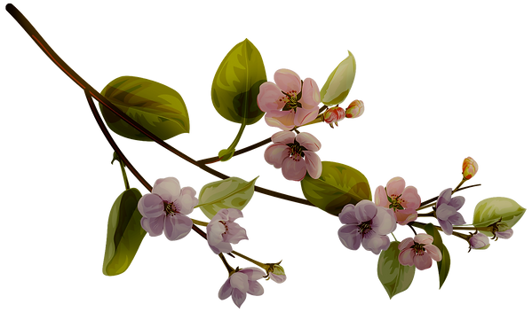 blossom_night_11.png