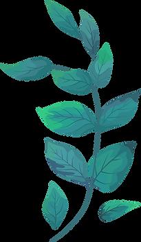 nooria plant