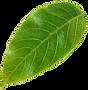 leaf1_.png