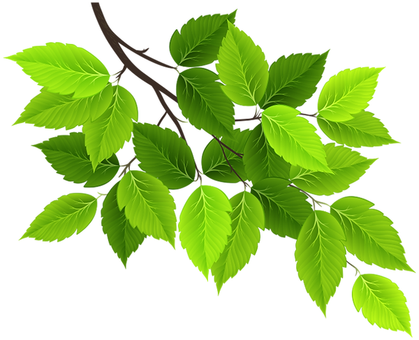 leaf_2 (1).png