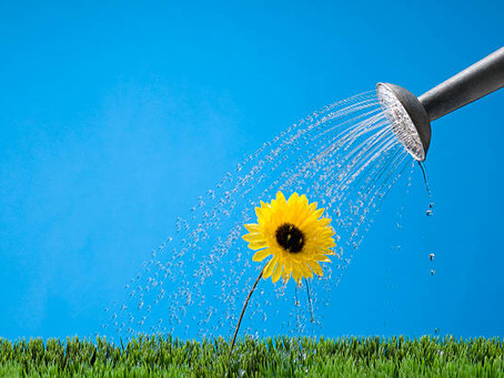 WATER THE FLOWERS!
