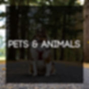 Pets and Animals Tile.jpg