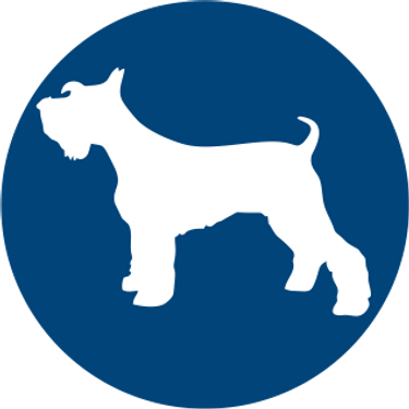 pet-shop-blue favicon.png