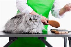 Cat%20Grooming_edited.jpg