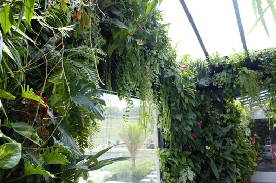 Indoor Jungle