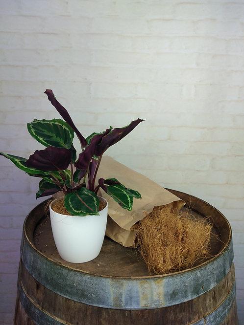 Copra (Coconut Husk)