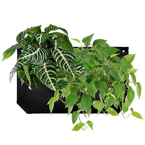 https://www.verticalgarden.co.nz/product-page/wally-1