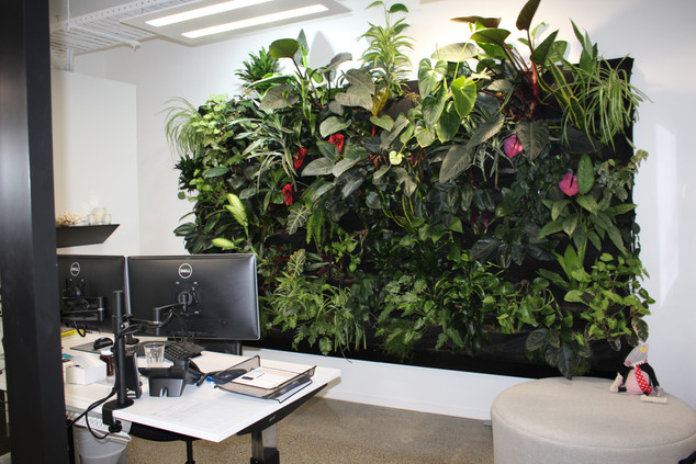 Office Live Green Wall