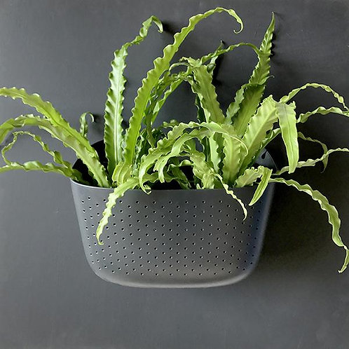 https://www.verticalgarden.co.nz/product-page/wally-eco-charcoal