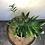 Thumbnail: Chamaedorea Costaricana
