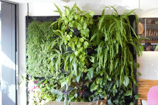 Green and Organics