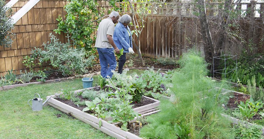 Elder couple outdoors enjoying working in their garden.