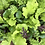 Thumbnail: Salad Mix