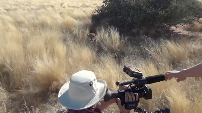 Namibia Safari Cheetah