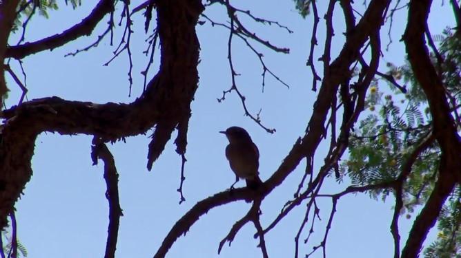 Namibia Safari Film Shoot