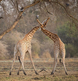 African Parks Pic.jpeg